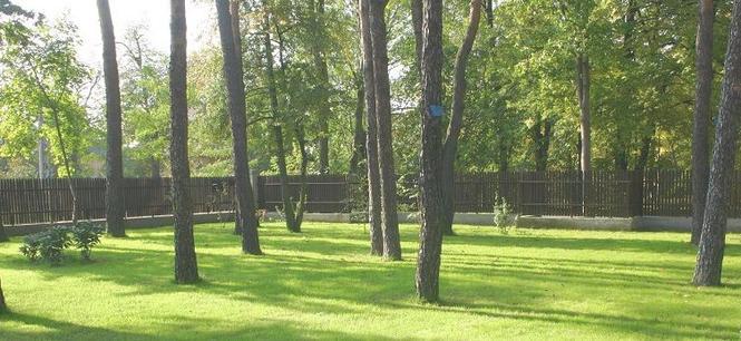 Wycięcie drzewa - opłaty