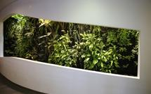 Ogrody wertykalne we wnętrzach. Jak założyć i pielęgnować ogród pionowy w domu?