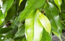 Popularne szkodniki roślin pokojowych – jak je zwalczać?
