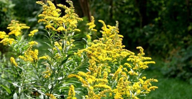 Pielęgnacja roślin kwitnących jesienią
