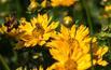 Nachyłek: rośliny miododajne