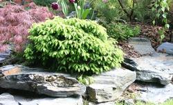Mały i duży ogród. Zasady projektowania i aranżacji ogrodu w zależności od jego wielkości