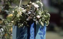 Karton z kwiatami