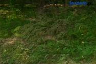Mszyce, nornice i krety w ogrodzie. Jak się ich pozbyć?